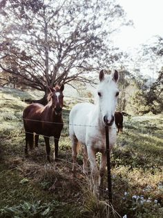 Reminds me of the horses I used to go visit in my Grandma's backyard. :)