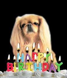 gooberella | Video Greetings, Video Marketing, Animation & 3D | Fiverr Make a talking dog or cat birthday video greeting at http://www.fiverr.com/gooberella