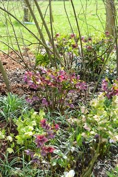 German garden visit Mr. Dalby. 04/15