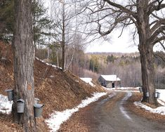 The sap is running!  It's maple sugaring time in New Hampshire!