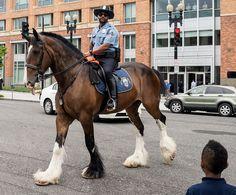 Police horse | Flickr: Intercambio de fotos