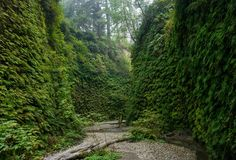 Fern Canyon Gold Bluffs Beach Steven Spielberg chose this as the location for The Lost World: Jurassic Park because 1) holy crap look at it, 2) it's an international Biosphere Reserve (what does that even mean???), and 3) it's a narrow gorge carved out by Home Creek with walls hugged by seven types of ferns, some of which date back 325 million years. It's a short trail, so double back on it. Twice. Okay fine, thrice.