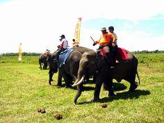 elephant way kambas in indonesian