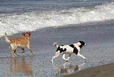 Ocean Beach Dog Beach: Dogs on Ocean Beach