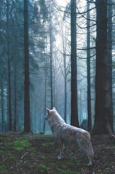 Summer was out in the woods walking close to the hunters camp. When she went there the hunters were all bandaged up still, sine almost looked dead. She sighed walking away until ... (Open RP)
