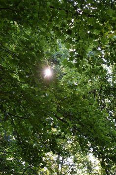Shine Through ~ Ridley Creek State Park, June 18, 2016.