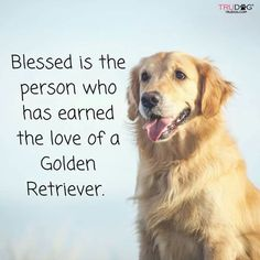 Blessed is the person who has earned the love of a golden retriever.