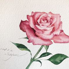 22 Ideas Flowers Drawing Rose Watercolour For 2019 Watercolor Flowers Tutorial, Watercolor Rose, Watercolour Painting, Botanical Art, Botanical Illustration, Jar Art, Rose Art, Gouache, Flower Art
