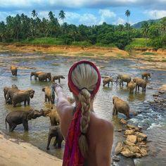 Elephants in Sri Lanka mylifesamovie.com