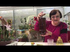 Plantar, Youtube, Make It Yourself, Gardening, Organic Fertilizer, Cinnamon Tea, Buddha's Hand, Container Gardening, Desert Rose