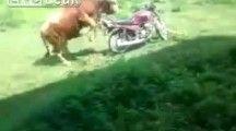 A transa do boi com a moto