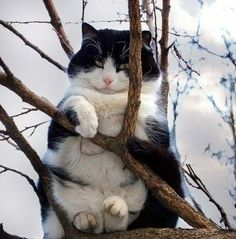 I'm not stuck -- I'm impersonating sn Owl . . .