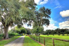 Marablue Farm | Ocala Farm for Sale | Ocala Horse Properties