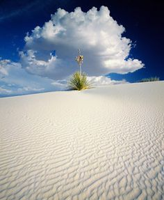 Yucca, Cumulus, White Sands, New Mexico by David Muench  http://www.muenchworkshops.com/