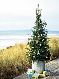 A fledgling redwood, adorned with simple white dried sea stars and pale blue and green ornaments, reflects the natural hues of Christmas at the shore. (Photo: Photo: Jay Graham)