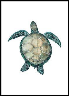 Sea turtle, poster