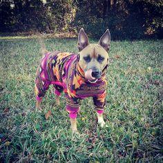 pitbull pajamas by Tooth&Honey