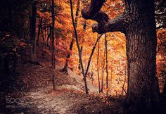 Forest of Fire by AnthonyPresley. @go4fotos