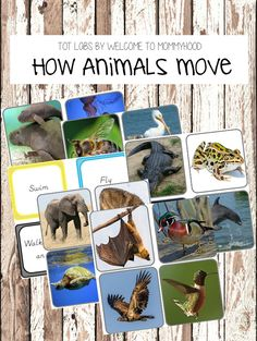 How animals move activity - Welcome to Mommyhood