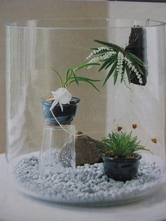 miniature orchids by gusseting, via Flickr  So cool!