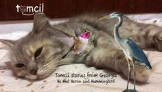 Heron, Hummingbird and Tomcil's Story in Georgia | Storytelling for Children