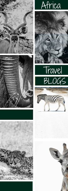 The top Africa travel blogs that will help you plan your African adventures.