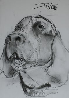 Bloodhound dog art portraits, photographs, information and just plain fun. Also see how artist Kline draws his dog art from only words at drawDOGS.com #drawDOGS