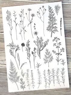 Herbs and Flowers por irina.vaneeva no Creative Market - flower tattoos - Tatuagem Herb Tattoo, Kritzelei Tattoo, Plant Tattoo, Clavicle Tattoo, Tattoos Skull, Body Art Tattoos, New Tattoos, Small Tattoos, Tatoos
