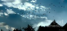 This photo by Debbie Rice Forand makes me want to fly away with these birds #birds #sky