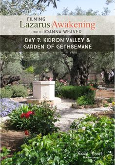"""It's day seven in Israel, and Joanna's """"Filming Lazarus Awakening"""" in the Kidron Valley and Garden of Gethsemane"""