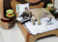 Dog bed number one: French Bulldog/Pug mix Cool Dog Beds, Cool Pets, Cute Dogs, Dog Furniture, Furniture Design, Tier Fotos, Pug Love, Pet Beds, Dog Life