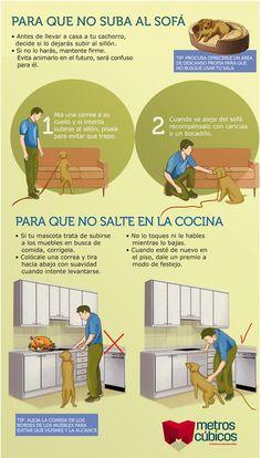 trucos para evitar que tu perro se suba al sillon