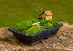 Small pot Fairy miniature garden with one asian house, a small path, a cute tiny tree and lots of moss