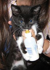 If you've ever had to hand-feed a tiny kitten or just care to know how, check this out.