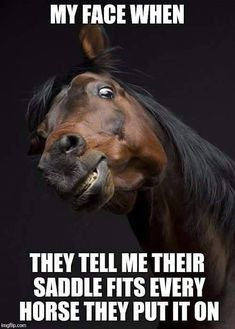 Horse Puns - funniest memes in the Stud Horse puns are best for horse lovers and for those who like horses, jokes, memes, funny pictures and puns. Just check this funny gallery. Horse Puns, Funny Horse Memes, Funny Horse Pictures, Funny Horses, Cute Horses, Funny Animal Memes, Horse Love, Horse Humor, Pretty Horses