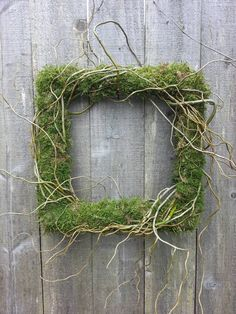 15 square wreath of sheet moss wrapped loosely with curly willow branches.