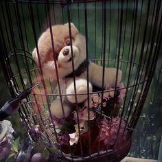 EL maltrato, cualquiera que sea su tipo, significa esto, basura. Esta foto,  de un bello perrito de peluche en la basura es un fiel reflejo del sentimiento de las personas que sufren cualquier tipo de maltrato