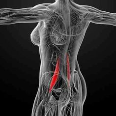 psoas muscle may be the most important muscle in your body. Read on to find out whether you might have a psoas muscle imbalance, and how to correct it. Cardio Yoga, Muscles In Your Body, Hip Muscles, Psoas Muscle, Muscle Pain, Hip Pain, Back Pain, Psoas Iliaque, Psoas Stretch