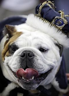 Photos from the 33rd Annual Beautiful Bulldog Contest