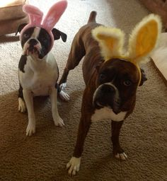 Easter Boxers