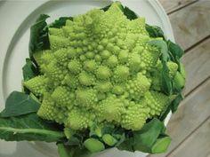 Neat Romanesco broccoli