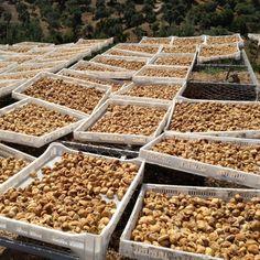 BIO BLOG: Da kommen die Bergfeigen her! Jetzt sind Sie eingetroffen, unsere Bio-Bergfeigen aus der Türkei. Die Neue Ernte erwarten wir immer wieder mit Spannung und auch etwas mit Ungeduld. Aber woher kommen unsere Bergfeigen und wie werden Feigen angebaut, geerntet und verarbeitet? Beans, Vegetables, Blog, Figs, Harvest, Vegetable Recipes, Veggie Food, Prayers, Beans Recipes