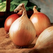 Onion Seeds - Ailsa Craig at Suttons Seeds Sutton Seeds, Lettuce Seeds, Growing Lettuce, Potato Onion, Bean Seeds, Greenhouse Growing, Winter Salad, Cold Frame, Grass Seed