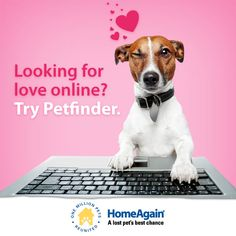 There is nothing like the love of a dog! Looking for love online? Try Petfinder!