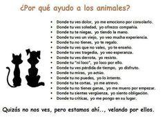 laddra.org, ayudamos a protectoras y animalistas sin recursos - Página web de LADDRA.ORG