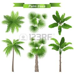 3 diferentes palmeiras - superior e vista frontal Banco de Imagens