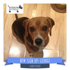 #NewDoggySignUp George is a friendly, trustworthy and loving Beagle who loves to have a good sniff around and explore :)