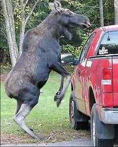 When Animals Meet Cars! | eBay