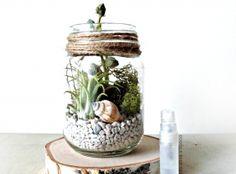 Tillandsia Terrarium Kit / Mason Jar Kit & Air Plants / Terrarium Gift Set / DIY Starter Kit / Gift for Mom