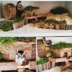 Natural habitat for hamster Dwarf Hamster Cages, Cool Hamster Cages, Gerbil Cages, Robo Hamster, Hamster Life, Hamster Toys, Hamster Stuff, Hamster Natural Habitat, Hamster Habitat